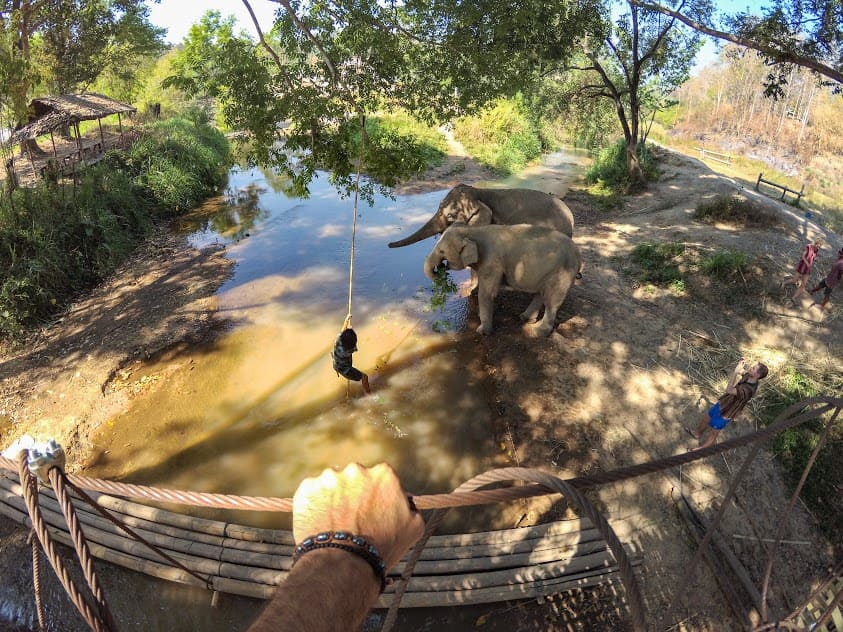 elephant sanctuary experience in chiang mai