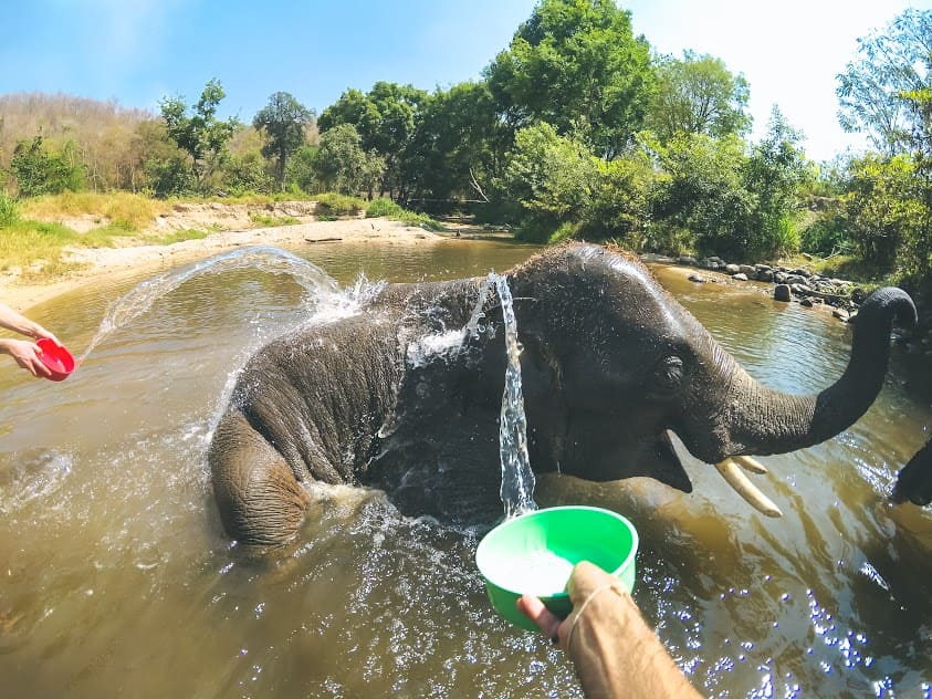 elephant tours in chiang mai